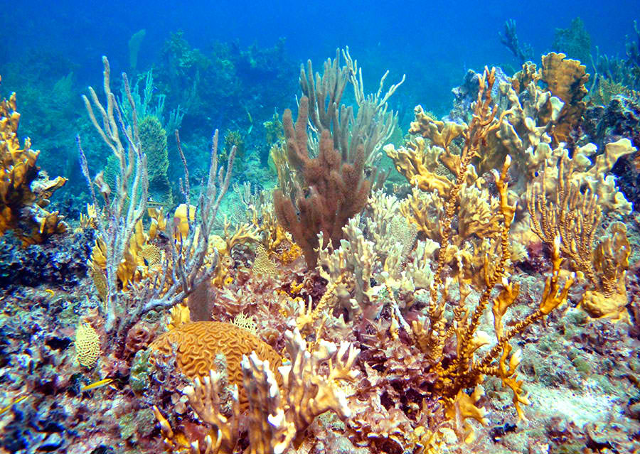 Snorkeling In Providenciales Turks And Caicos Tourism Official Website