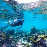 Turks and Caicos-Snorkeling