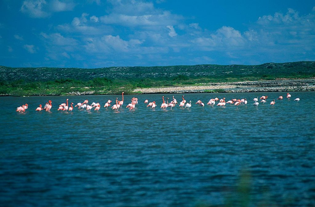 Flamingo Pond Things to See in North Caico