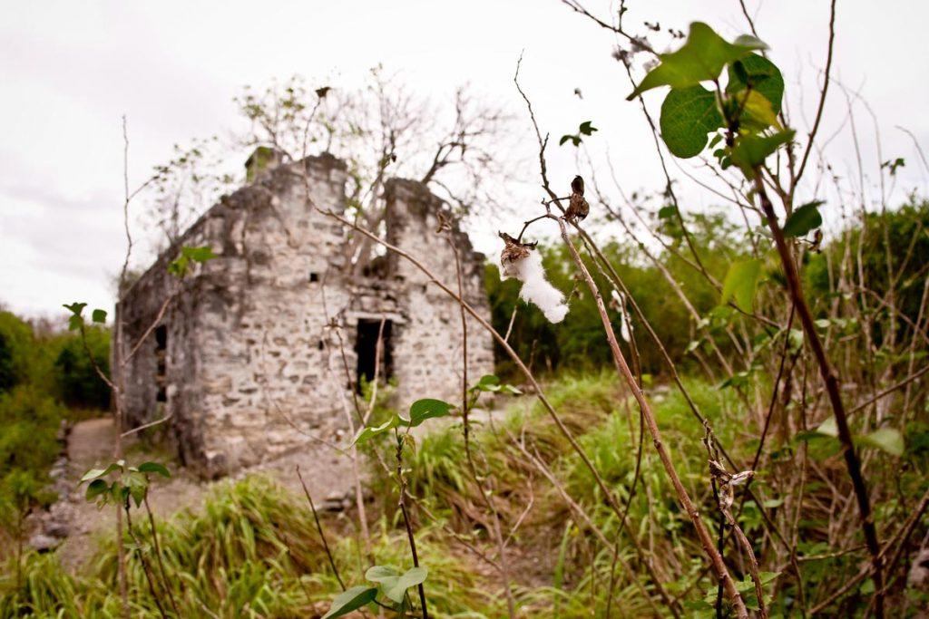 Wedes Green Plantation