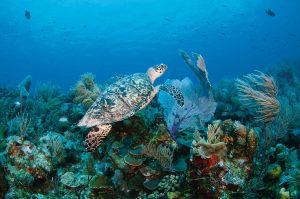Sea turtle - Providenciales Snorkeling , Scuba Diving