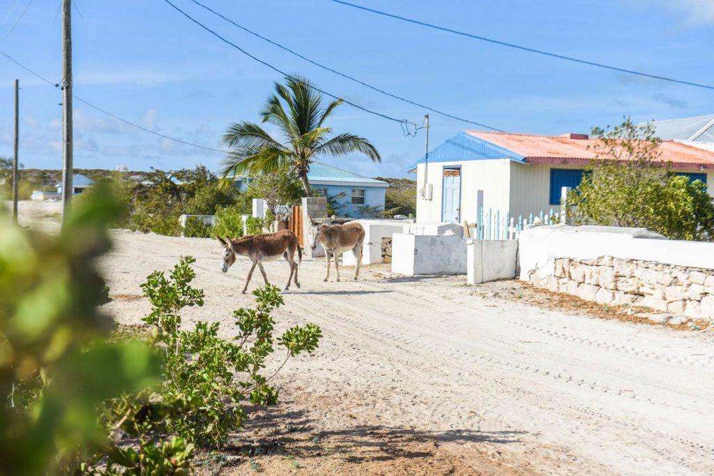 Salt Cay Street, Turks and Caicos